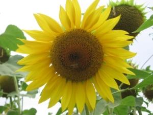 flores-en-la-flor1