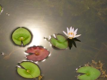 agua-dorada-lo-ver-lo-invisible