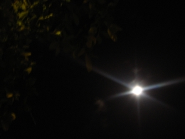 mi luna de media noche