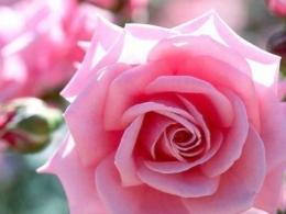 rosa-rosada