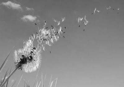 Resultado de imagen de viento turmbl
